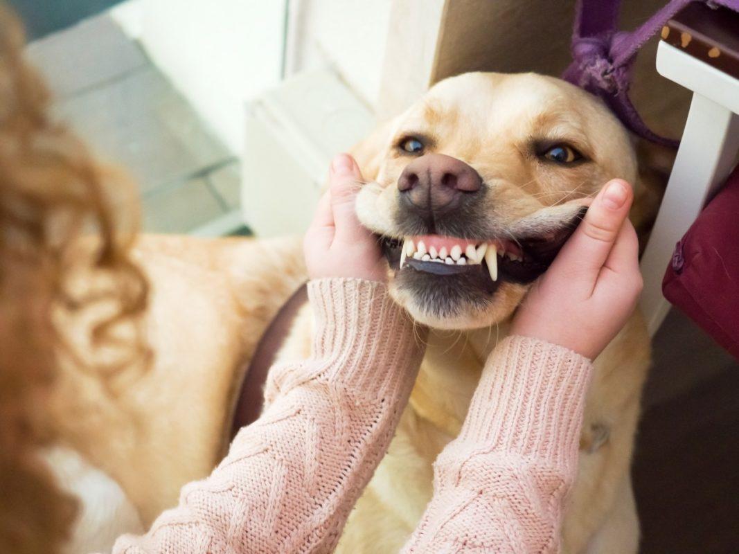 10 dicas para escovar os dentes do seu pet – Aulife Natural Pet Food